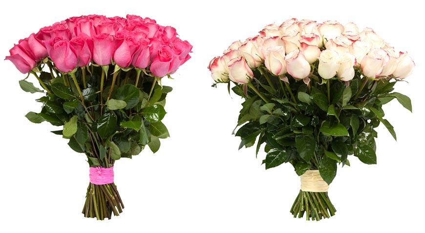 Růže umí mluvit – třeba i svoji barvou.