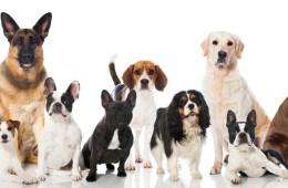 Hitem mezi chovateli jsou interaktivní a plnící hračky pro psy.