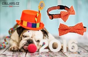 Obojek pro psa nemusí nudit. Pořiďte svému pejskovi český obojek s motýlkem. Koupíte jej v e-shopu Collars.cz.