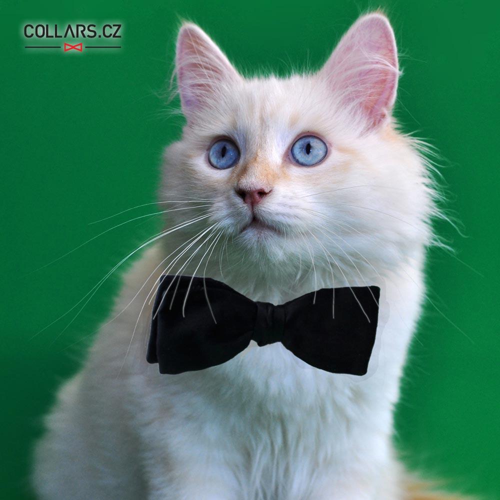 Pořiďte i své kočce obojek s motýlkem. Koupíte jej v e-shopu Collars.cz.