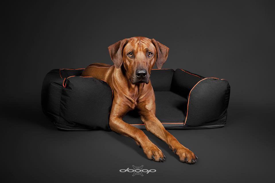 Pelíšky pro psy jsou základní výbavou pro každého pejsky. (Rhodéský ridgeback v luxusním pelíšku značky Dooop.)