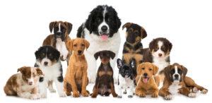 Vybrat si správně plemeno psa je stejně důležité, jako si vybrat kamaráda nebo partnera.