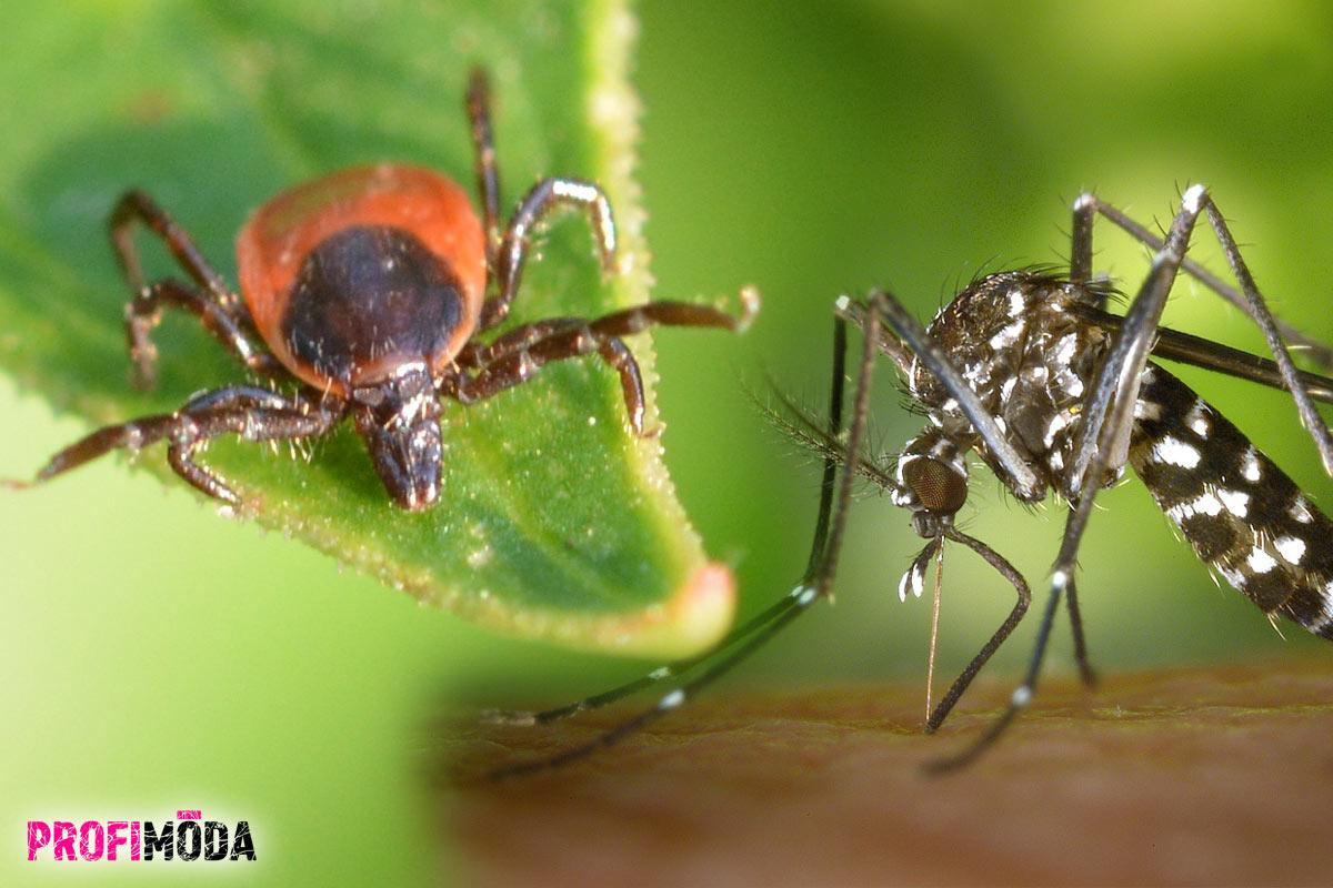 Repelent proti klíšťatům i komárům je důležitou ochranou už od brzkých jarních měsíců.